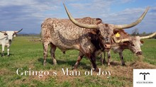 GRINGO'S MAN OF JOY